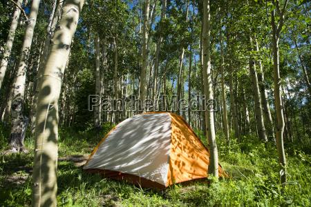 a tent sitting in an aspen