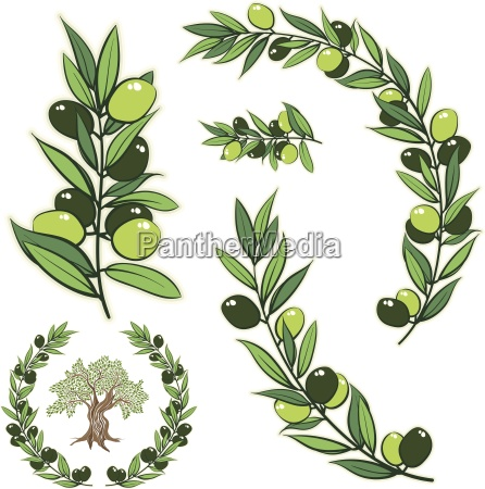 vector frame with olive branch hand