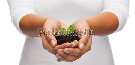 frau haende halten pflanze im boden