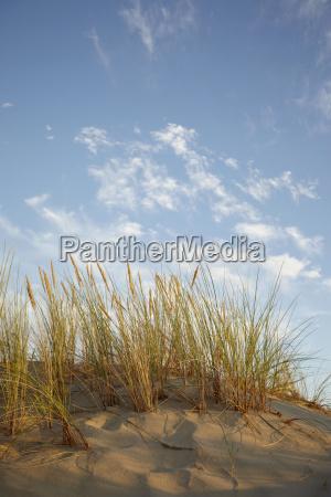 duenen gras mit warmen sonnenlicht und