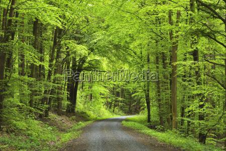 forest road in spring miltenberg miltenberg