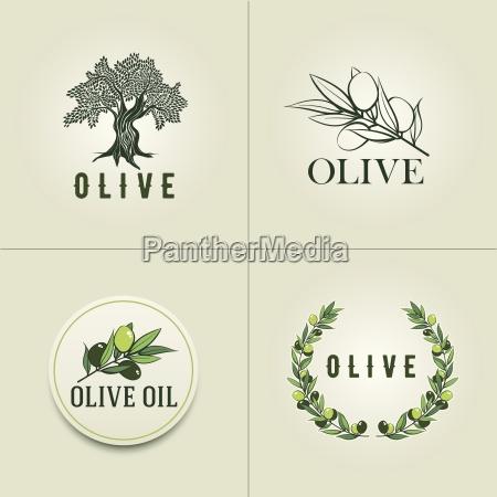 various olive logo design templates olive