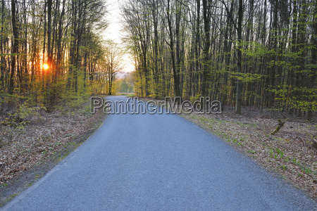 country road at sunrise in spring