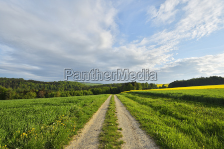 gravel road in countryside in spring