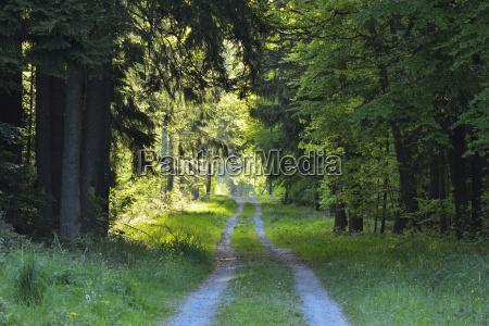 forest road in spring wenschdorf miltenberg