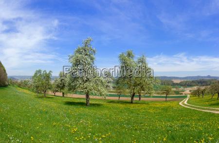 blühende, obstbäume, in, ländlicher, landschaft, - 17771964