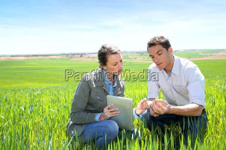 agronom der weizenqualitaet mit landwirt betrachtet