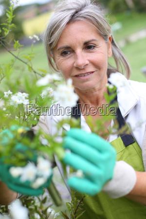 aeltere frau die blumen kultiviert