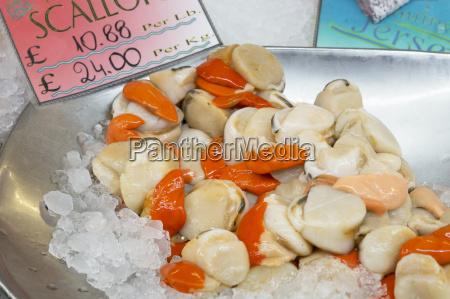 frische jakobsmuscheln auf einem markt