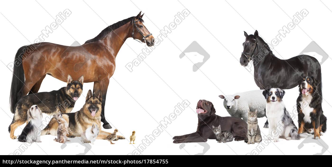 viele, tiere, collage - 17854755