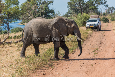 elefantenuebergang vor dem jeep