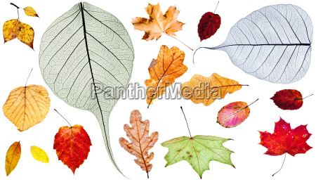 set of different autumn leaves isolated