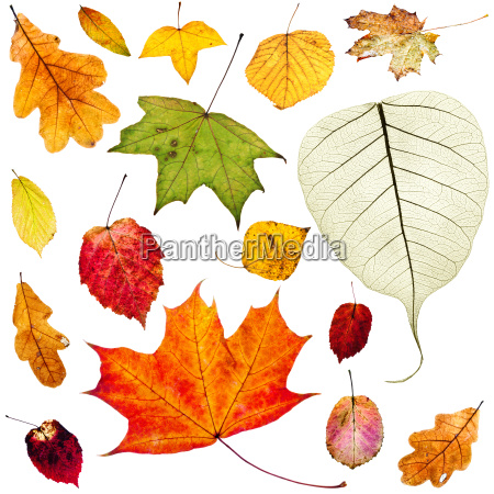 set of colorful autumn leaves isolated