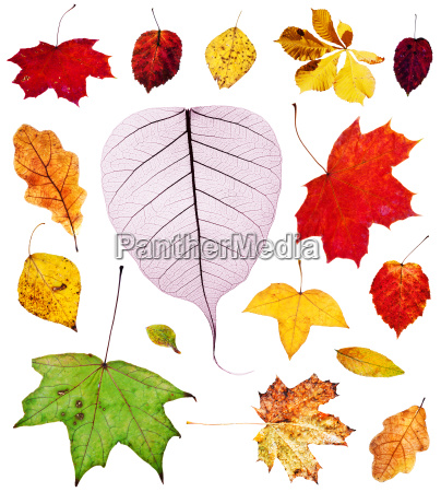 set of multicolored autumn leaves isolated