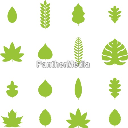 vector various line leaf icon collection