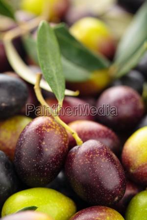fresh olives background