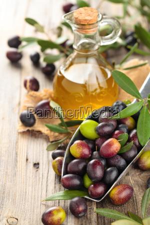 frische oliven und olivenoel