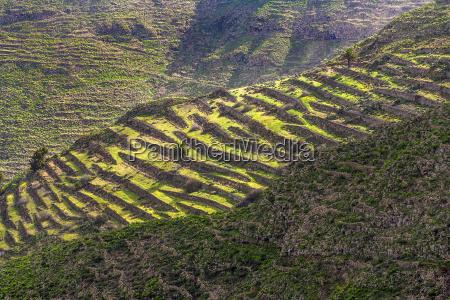 landscape lanzarote terracced fields near small