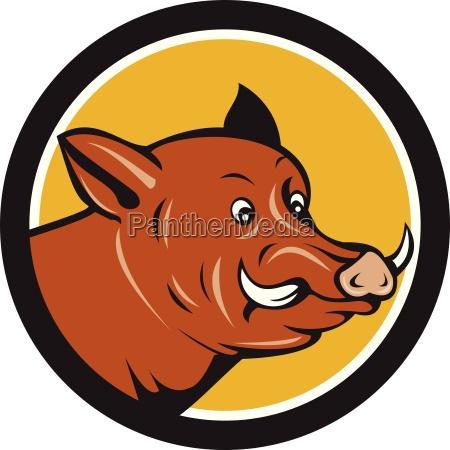wildschwein razor kopf startled kreis karikatur