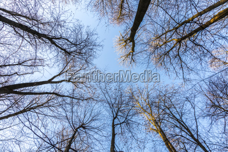 oak branches against the sky