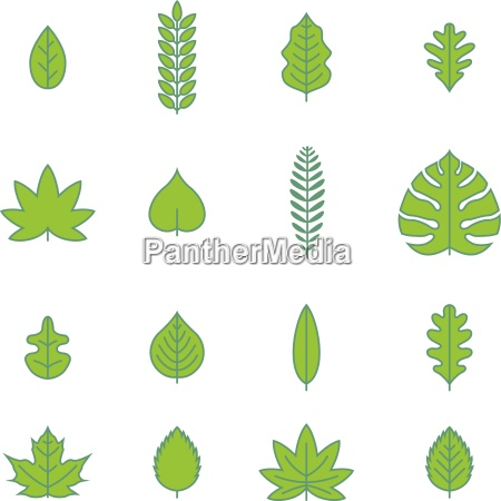 vector various leaf icon collection