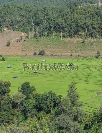 gruene reisterrassenfelder in thailand