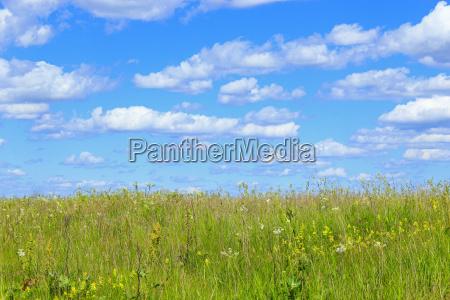 sommerfeld mit gras und blauem himmel