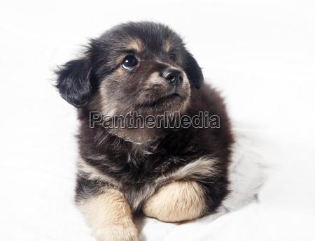 entzueckender kleiner welpenhund