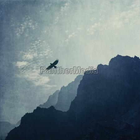 fahrt reisen tier vogel wolke gipfel