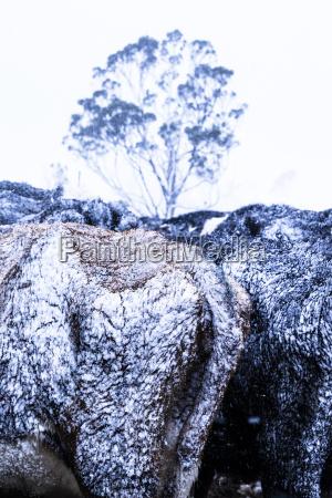 baum winter tier landwirtschaft ackerbau pelz