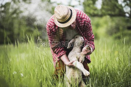 schaefer untersucht lamm auf weide