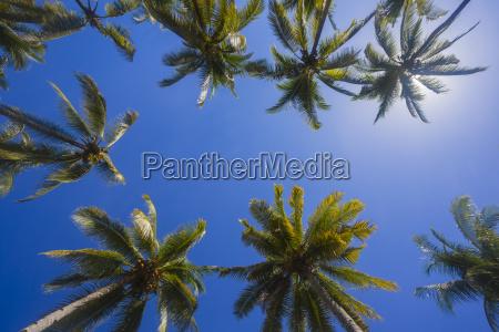 palmen gegen die sonne kopierplatz