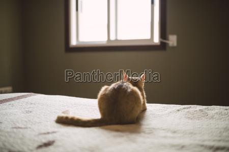 rueckansicht von katze auf dem bett