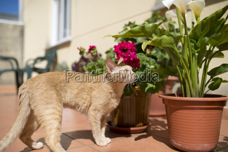cat on a terrace with potted