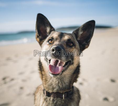 portrait of mongrel on the beach
