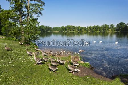 fahrt reisen baum park tier schwan