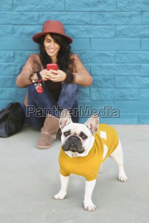 portrait of french bulldog wearing yellow