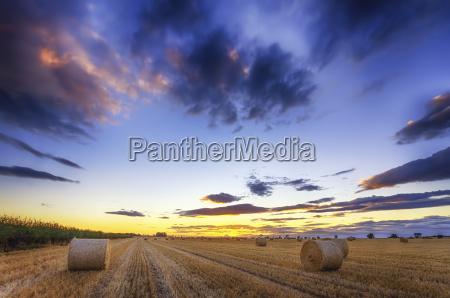 scotland east lothian hay bales on