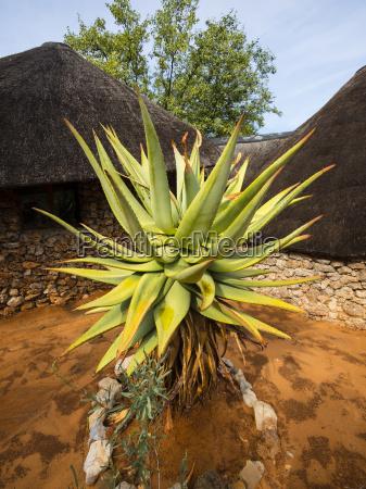 blatt baumblatt fahrt reisen namibia outdoor