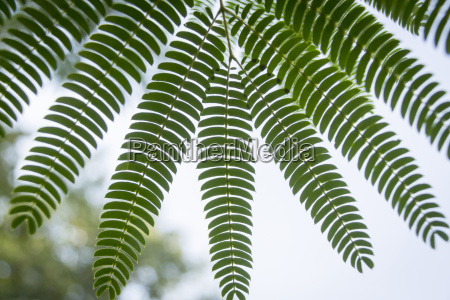 nature fern leave