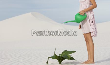 eine frau bewaessert eine pflanze im