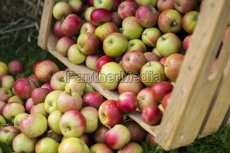 lese frucht obst behaelter boxen schachteln