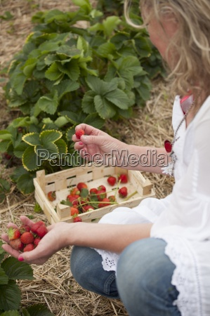 a woman picking strawberries in a