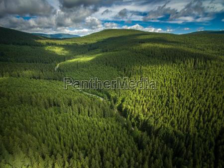 luftaufnahme der berge mit nadelwaeldern bedeckt