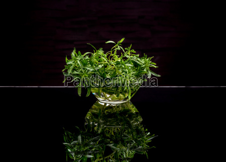 fresh green thyme