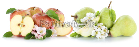 apple and pear apples pearfruit fruit