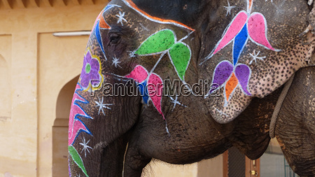 close up of a decorated elephant