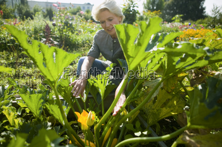senior woman looking at squash plant