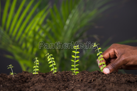 persons hand planting plant