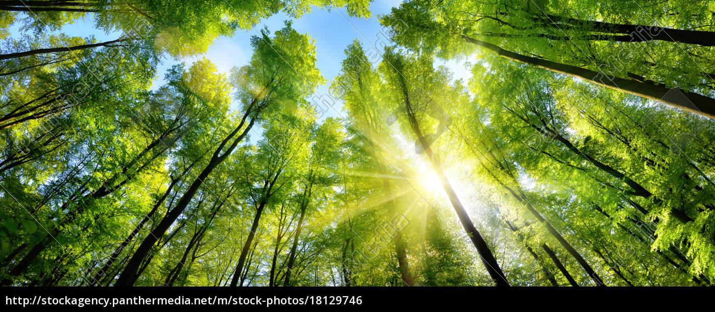 zauberhafter, sonnenschein, auf, grünen, baumkronen, im - 18129746